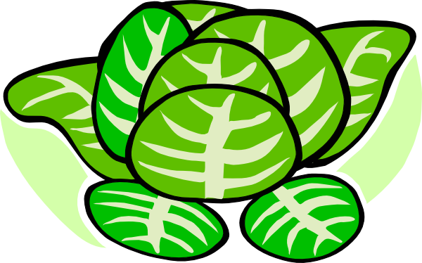 cabbage clipart animated