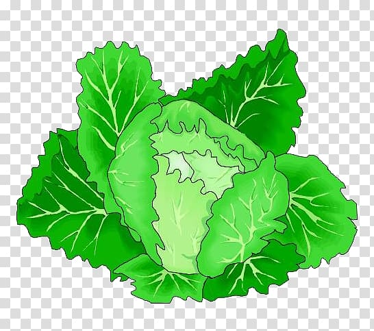 Leaf vegetable cartoon green. Cabbage clipart animated