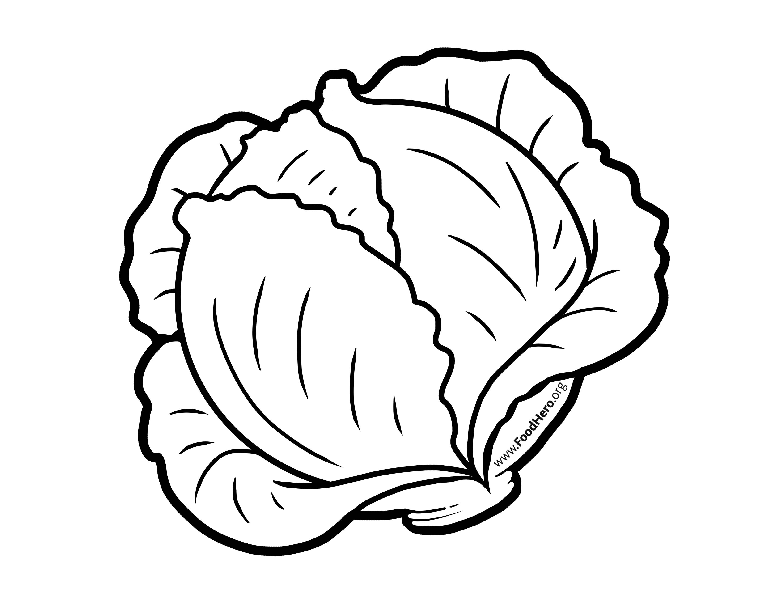 Drawing free download best. Cabbage clipart black and white
