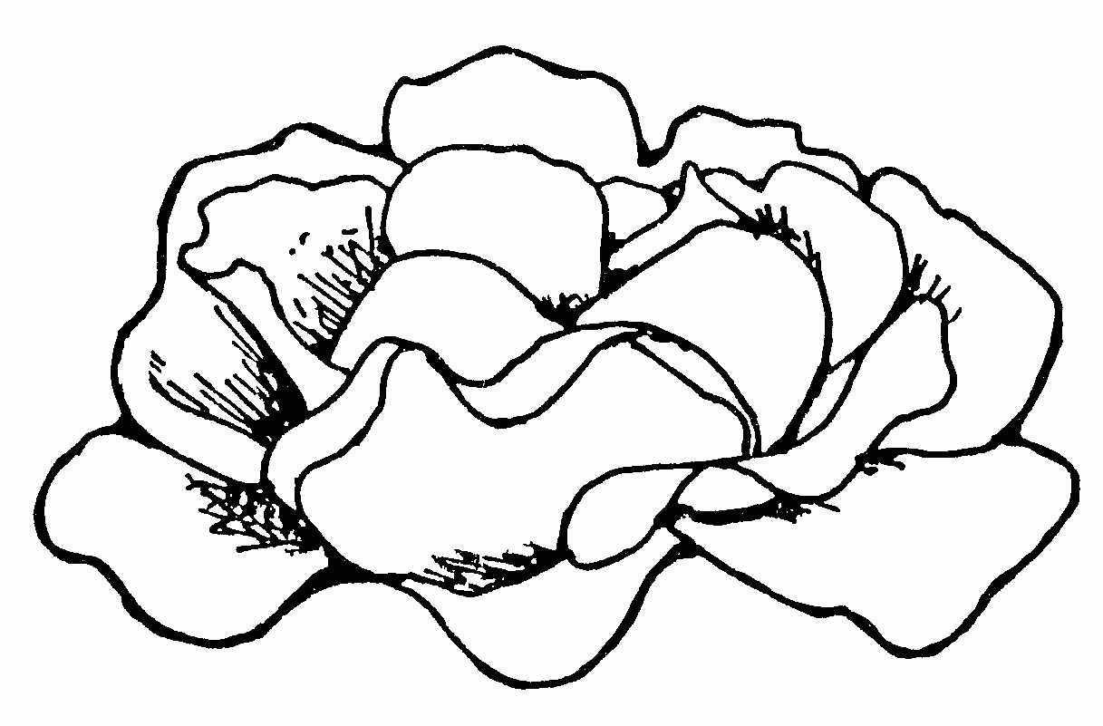 Great of lettuce letter. Cabbage clipart black and white