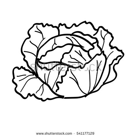 Station . Cabbage clipart black and white