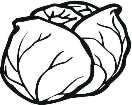 Lettuce clipart outline. Cabbage black and white