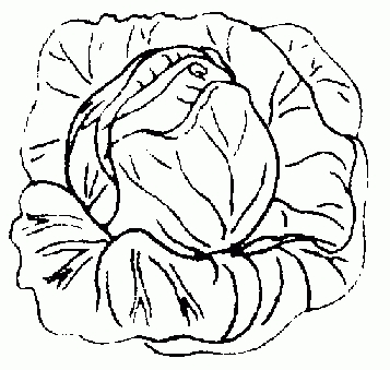 Letters example inside . Cabbage clipart black and white