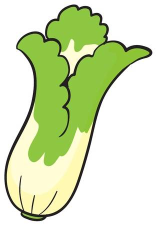 Cabbage clipart bok choy. Free on dumielauxepices net