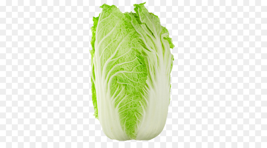 Cabbage clipart bok choy. Chinese cuisine napa savoy
