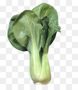 Chinese leaf vegetable clip. Cabbage clipart bok choy