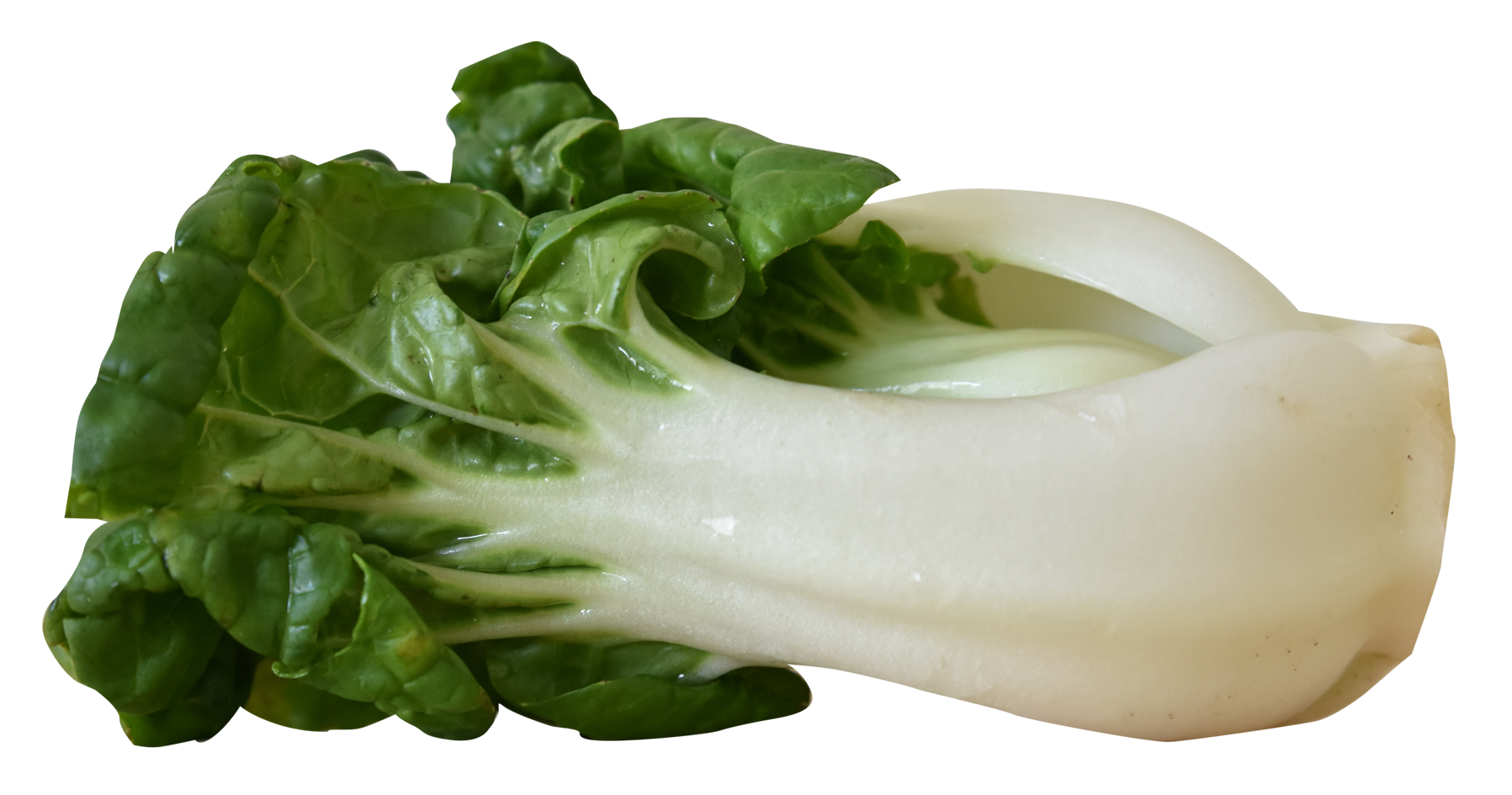 Png image purepng free. Vegetables clipart bok choy