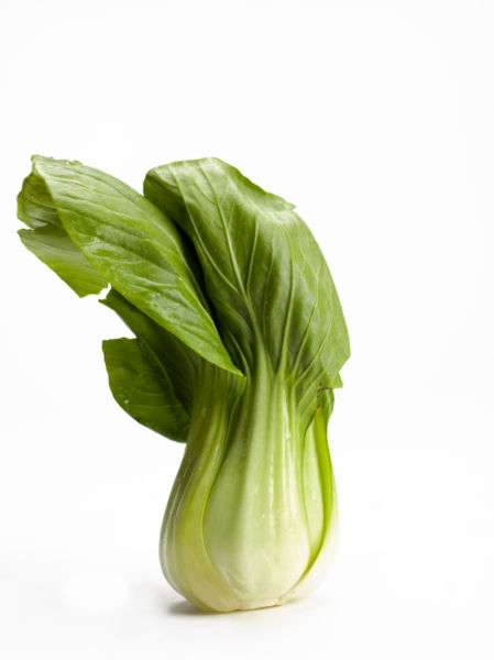 Choi stock photo free. Cabbage clipart bok choy
