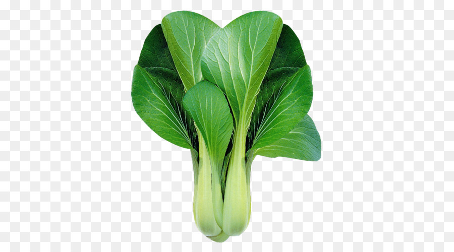 Cabbage clipart bok choy. Chinese leaf vegetable clip
