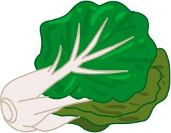 Free clip art. Cabbage clipart bok choy