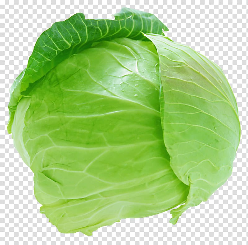 Lettuce clipart cabbage. Savoy coleslaw brussels sprout