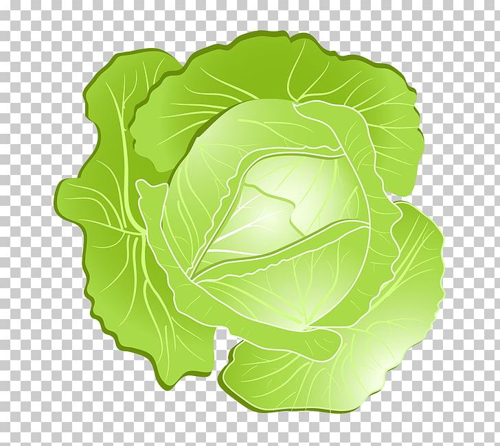 Savoy kohlrabi vegetables png. Cabbage clipart cabage