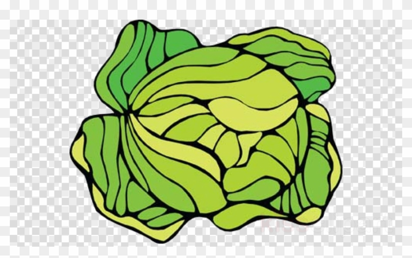 Cabbage clipart cabage. Love cauliflower clip art