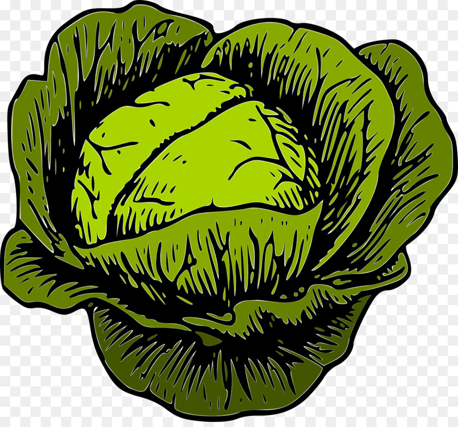 Savoy vegetable clip art. Cabbage clipart cabagge