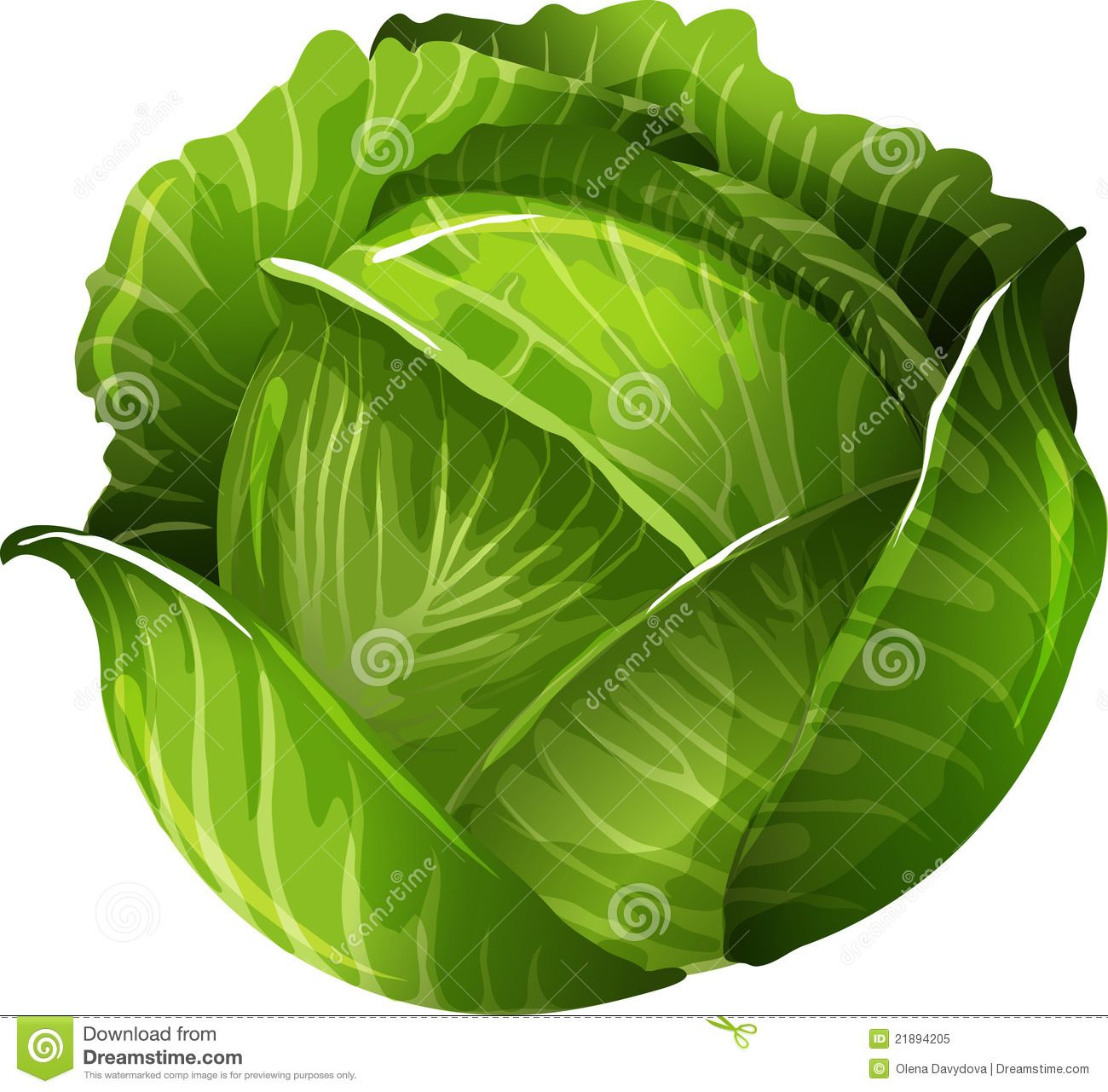 cabbage clipart cabagge