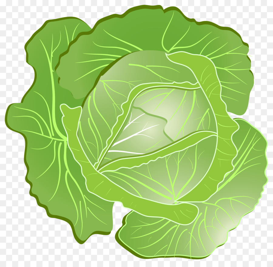 Cabbage clipart cabagge. Green leaf background vegetable