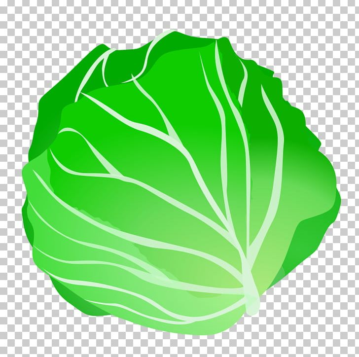 Cabbage clipart cabbage chinese. Vegetable png