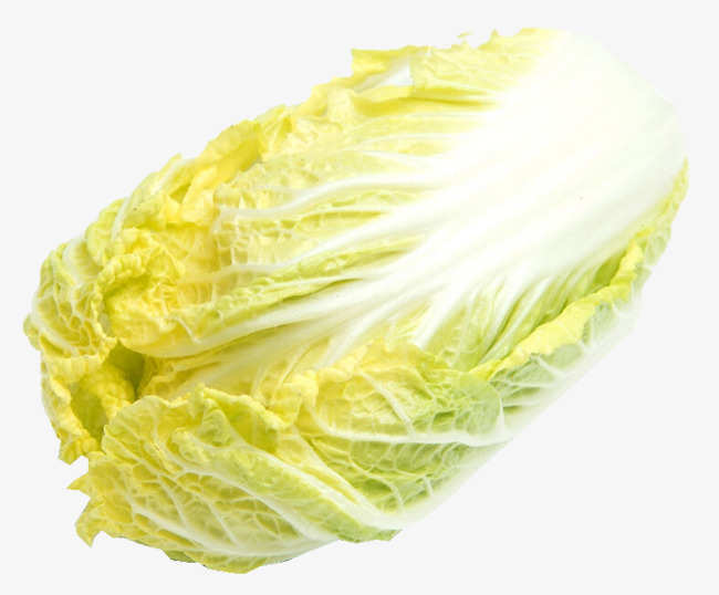 Cabbage clipart cabbage chinese. Organic product kind png