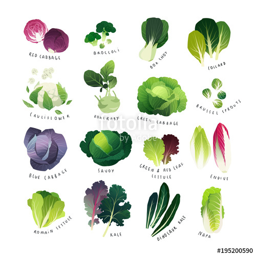 Clip art collection with. Cabbage clipart cabbage chinese