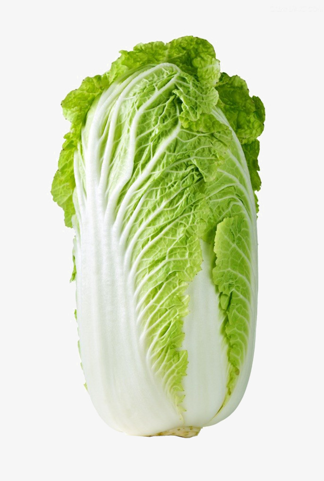 Cabbage clipart cabbage chinese. Hd clips real png