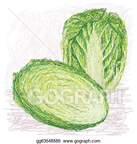 Vector illustration napa with. Cabbage clipart cabbage chinese