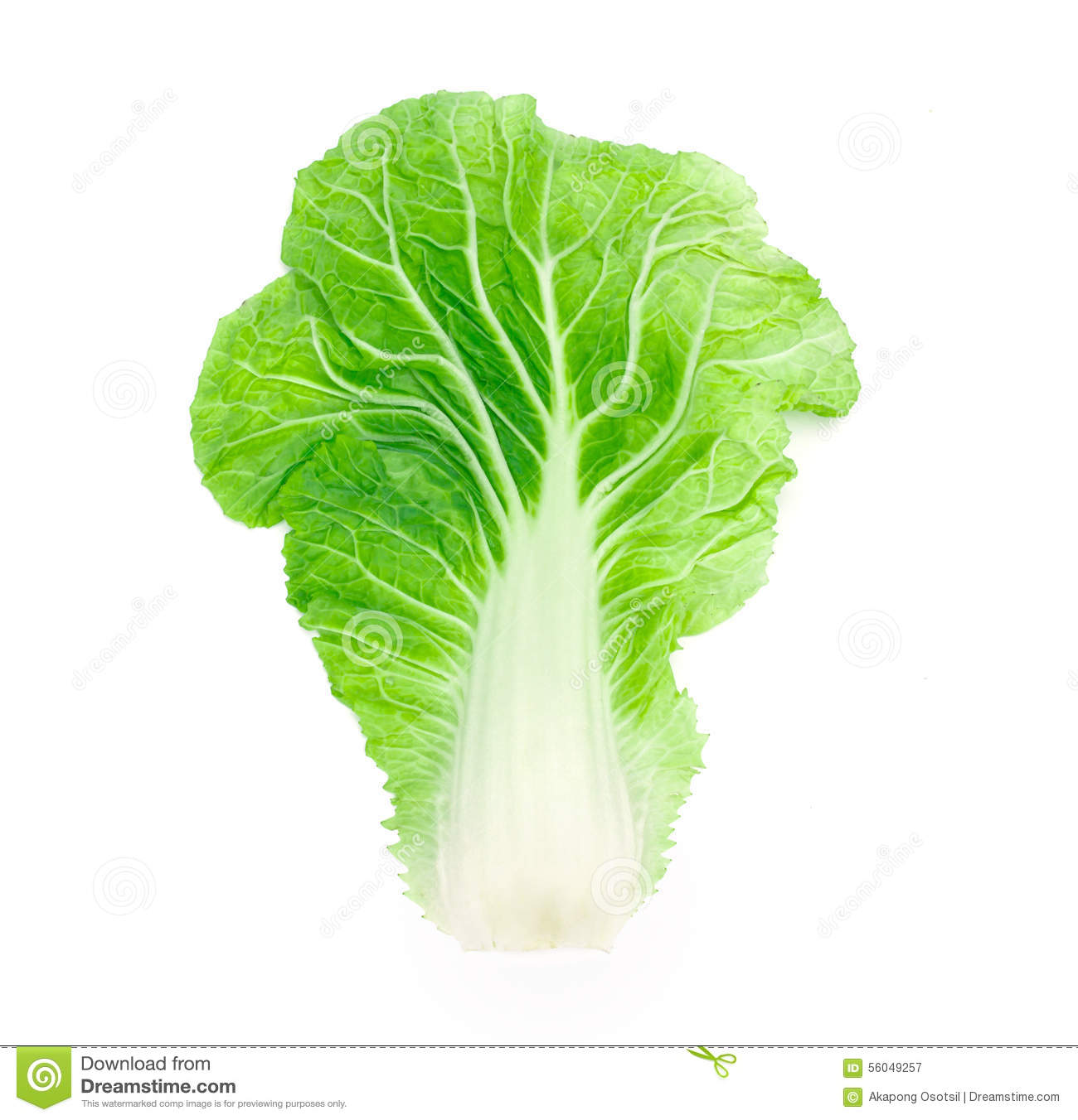 Cabbage clipart cabbage chinese. Station