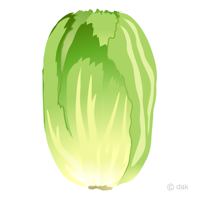 Free picture illustoon . Cabbage clipart cabbage chinese