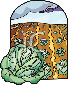 Field of clip art. Cabbage clipart cabbage patch