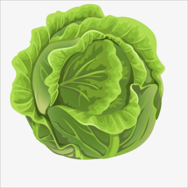 Bun vegetables png image. Cabbage clipart cabbage plant