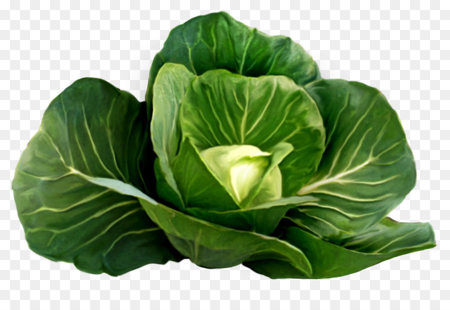 Cabbage clipart cabbage plant. Red cauliflower clip art