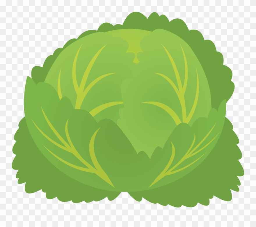 Cabbage clipart cabbage plant. Png download