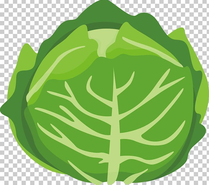 Cabbage clipart cartoon. Chinese vegetable png balloon