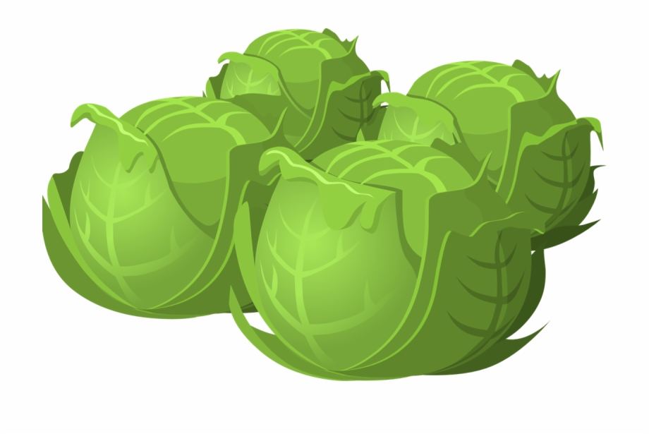 Food png cabbages pngtube. Cabbage clipart cartoon