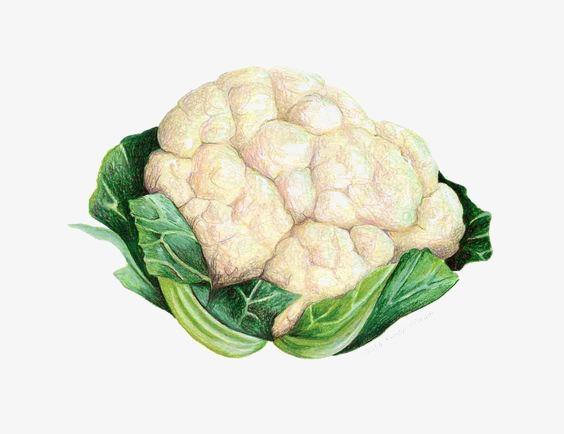 Vegetables illustration png image. Cabbage clipart cauliflower