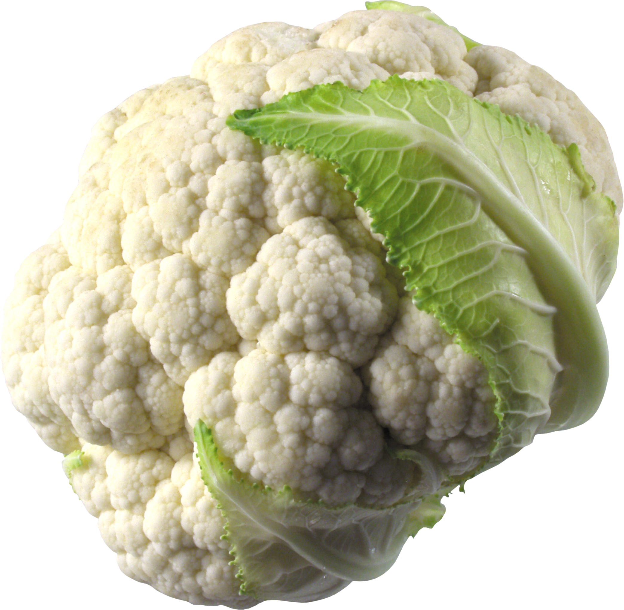 Cabbage clipart cauliflower. Png image free download