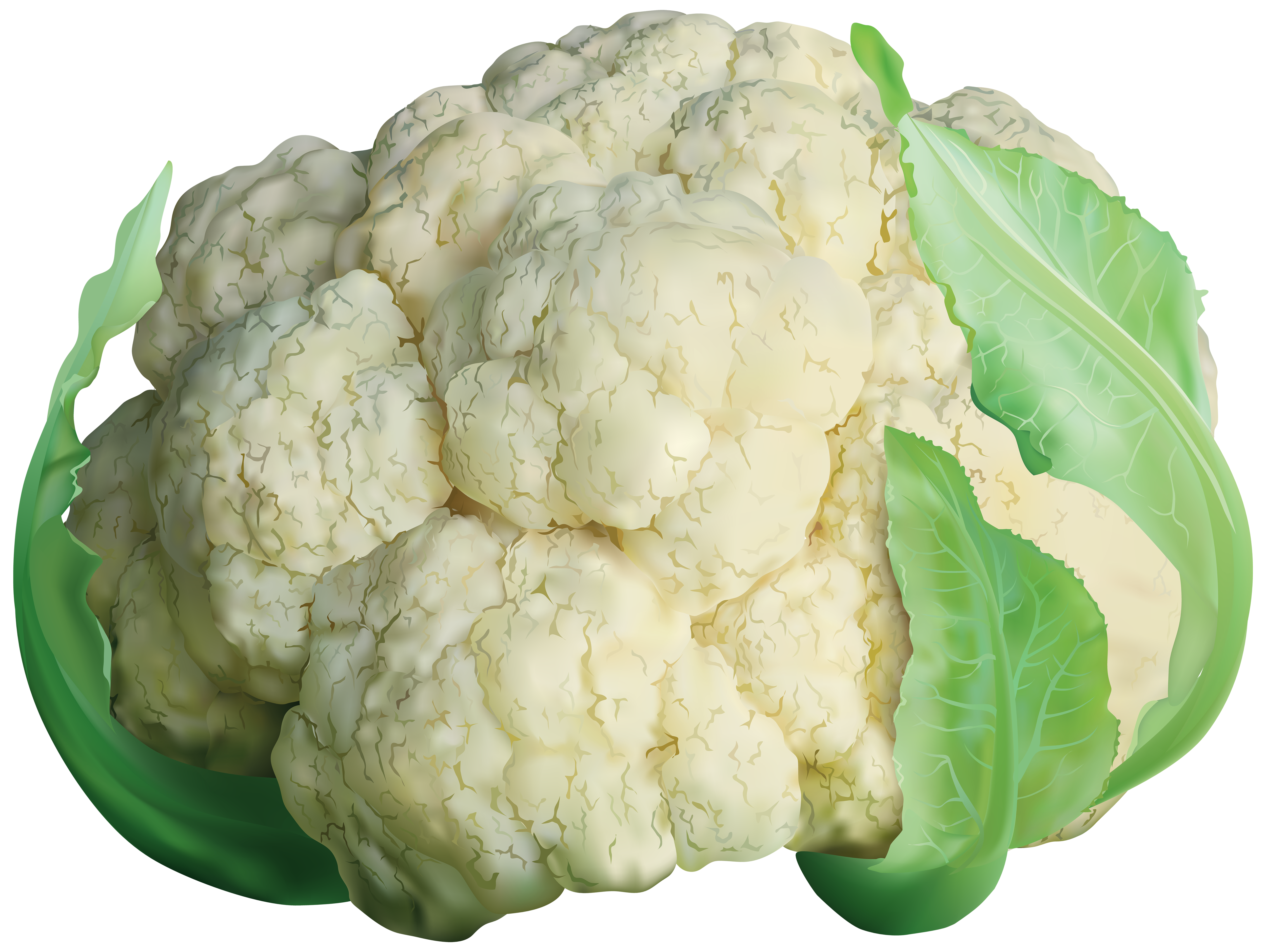 Cabbage clipart cauliflower. Transparent png clip art