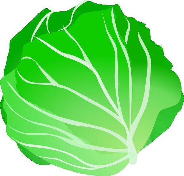 Cabbage clipart clip art. At clker com vector