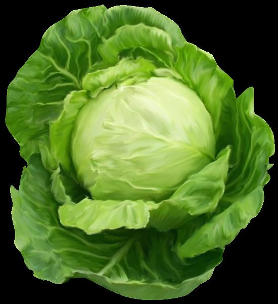 Cabbage clipart clip art. K poszta p pinterest