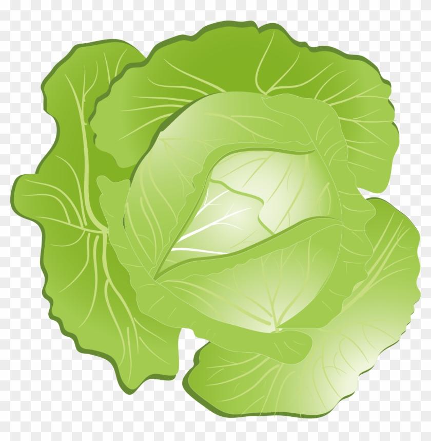 Red kohlrabi transparent background. Cabbage clipart clip art