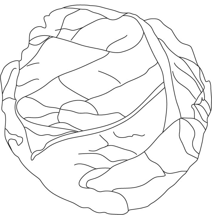 Cabbage clipart coloring. Drawing at getdrawings com