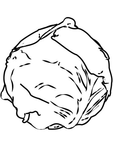 Cabbage clipart coloring. Page free printable pages