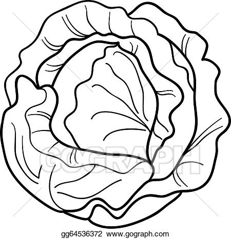 Vector stock vegetable cartoon. Cabbage clipart coloring