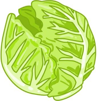 Free cute cliparts download. Lettuce clipart head lettuce