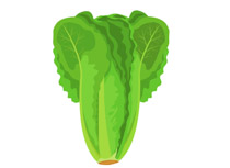 Free vegetables clip art. Cabbage clipart cute