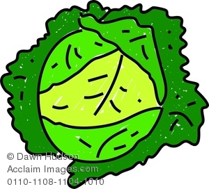 Cabbage clipart drawing. Image of a whimsical