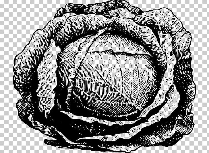 Cabbage clipart drawing. Vegetable png art black