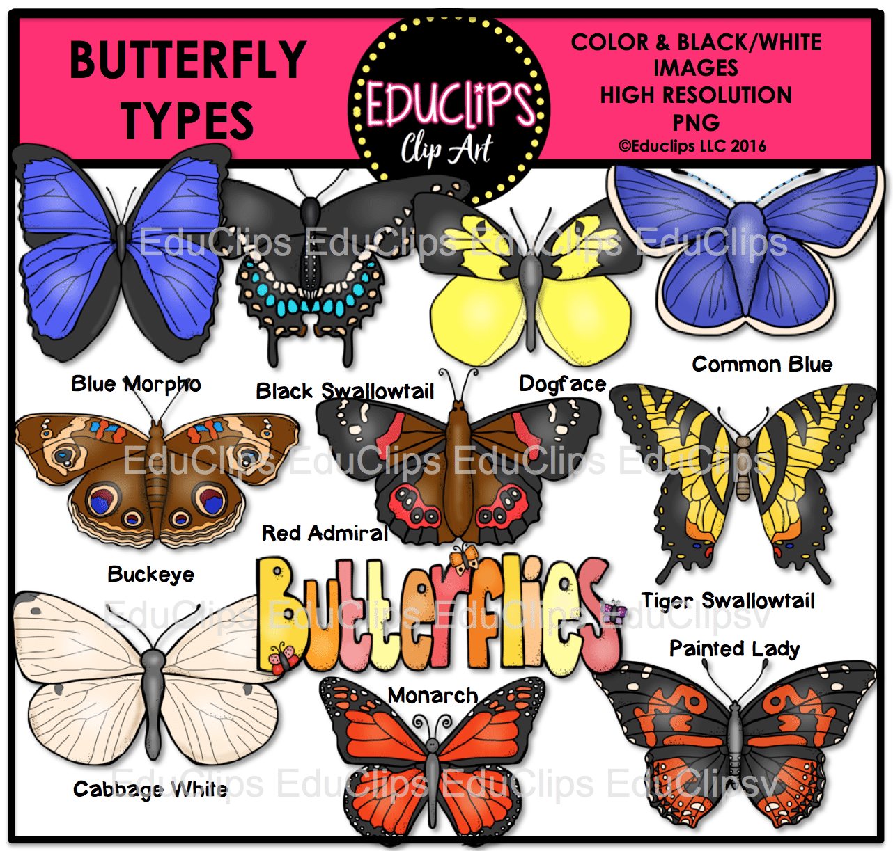 Butterfly types clip art. Cabbage clipart educlips