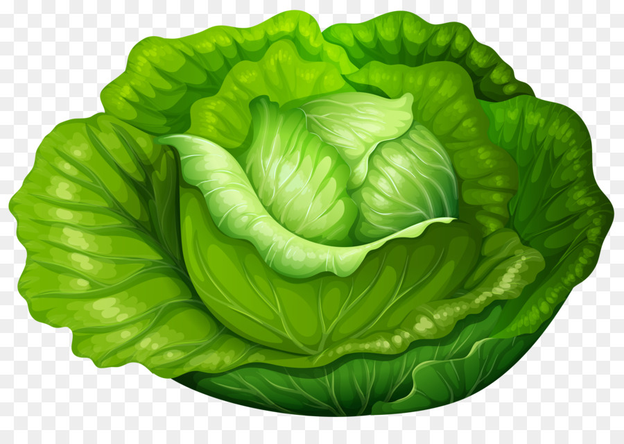 Iceberg lettuce vegetable clip. Cabbage clipart green cabbage