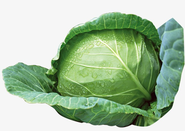 Vegetables png image and. Cabbage clipart green cabbage