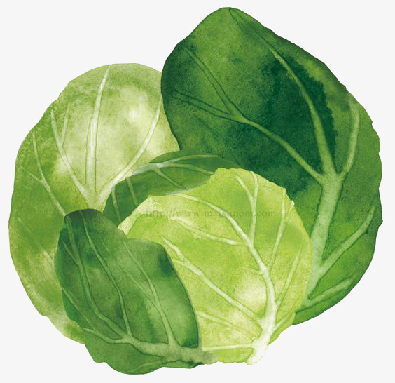 Cartoon vegetables png image. Cabbage clipart green food